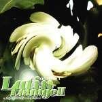Abstract Latin Lounge 2 - Vari