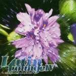 Abstract Latin Lounge I