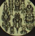 Charalambides: Branches