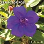 Reflector Pool: Flower