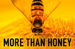 More Than Honey (DVD und Blu-ray)
