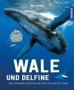 Wale & Delfine Cover